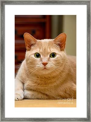 Feline Portrait Framed Print