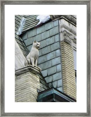 Feline Sentry Framed Print by Jeff Kolker