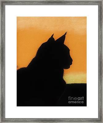Feline - Sunset Framed Print