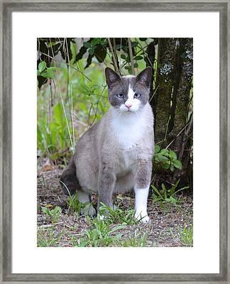 Feline With Attitude Framed Print