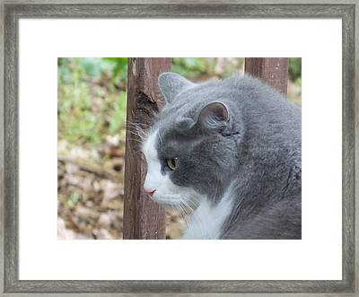Felix The Cat 1 Framed Print