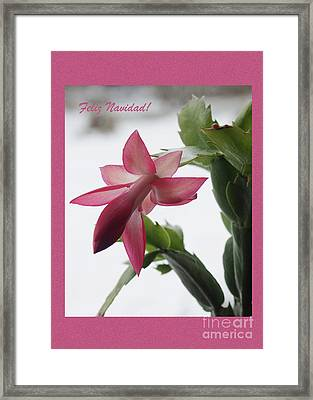 Feliz Navidad Pink Christmas Cactus Photo Greeting Card  Framed Print