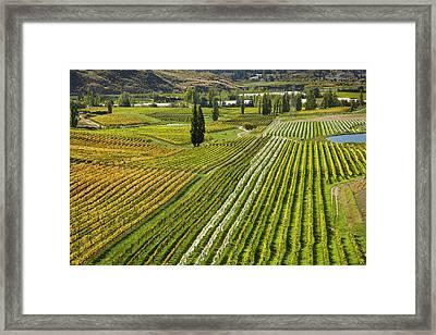 Felton Road Vineyard In Autumn Framed Print by David Wall
