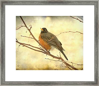 Female American Robin Framed Print
