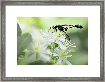 Female Black Mud Dauber Framed Print by Optical Playground By MP Ray