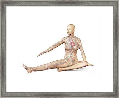 Female Body Sitting In Dynamic Posture Framed Print by Leonello Calvetti