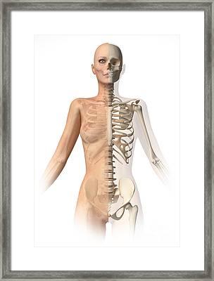 Female Body With Bone Skeleton Framed Print by Leonello Calvetti