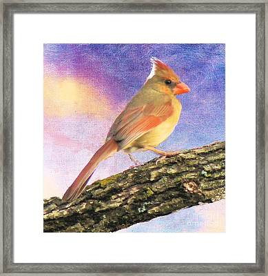 Female Cardinal Away From Sun Framed Print by Janette Boyd