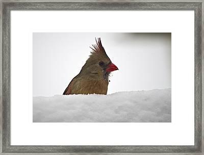 Snowy Peek-a-boo Framed Print