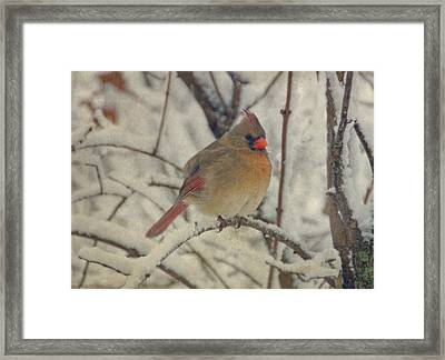 Female Cardinal In The Snow II Framed Print by Sandy Keeton