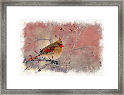 Framed Print featuring the photograph Female Cardinal Portrait by Dan Friend