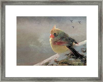 Female Cardinal V Framed Print by Janette Boyd