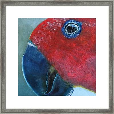 Female Eclectus Framed Print