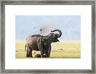 Female Elephants With Calf Framed Print by Sabirmallick