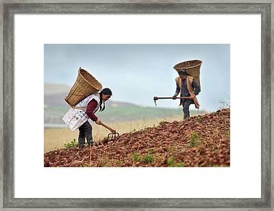 Female Farm Workers Harvesting Potatoes Framed Print