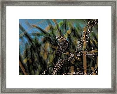Female Grackle On The Dark Side Framed Print by Deborah Benoit