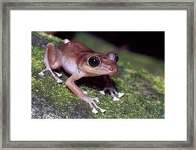 Female Guajon Framed Print