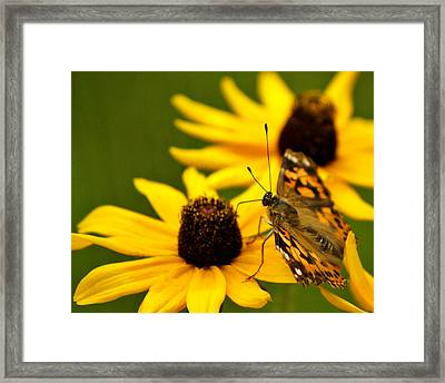 Female Gulf Fritillary  Framed Print by Carol Toepke
