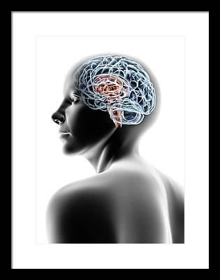 Brainstem Photographs Framed Prints