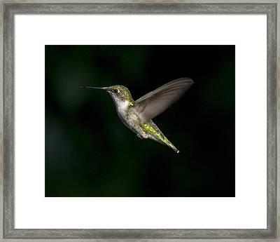 Female In Flight 4 Framed Print