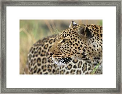 Female Leopard Portrait Masai Mara Framed Print by Yva Momatiuk John Eastcott