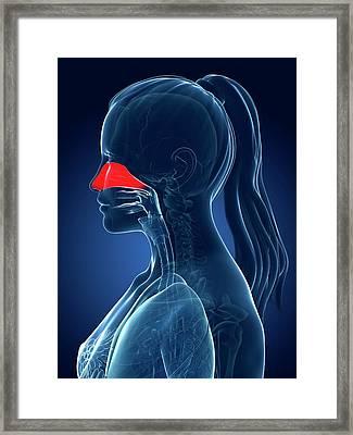 Female Nasal Cavity Framed Print