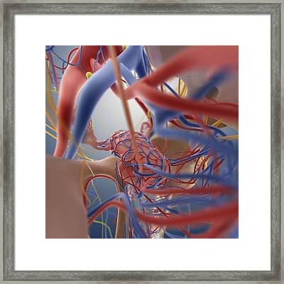 Female Reproductive System, Artwork Framed Print by Science Photo Library