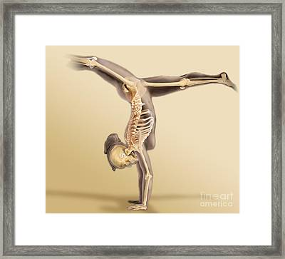 Female Skeletal System Framed Print by Anatomical Travelogue