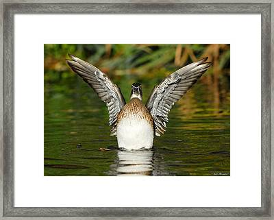 Female Wood Duck Framed Print by Avian Resources