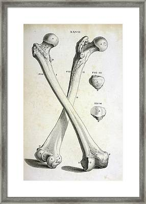 Femur Bones Framed Print by British Library