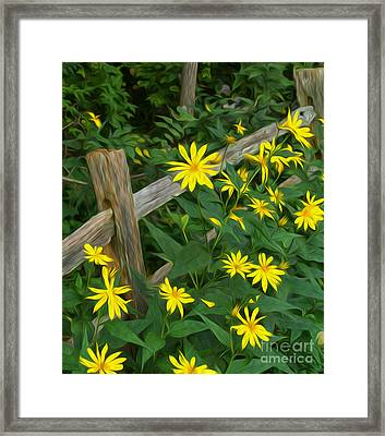 Fence And Flowers Framed Print by Brian Mollenkopf