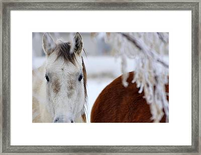 Fence Friend 13195 2 Framed Print by Jerry Sodorff