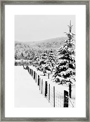Fence Line Framed Print by Tim Wilson