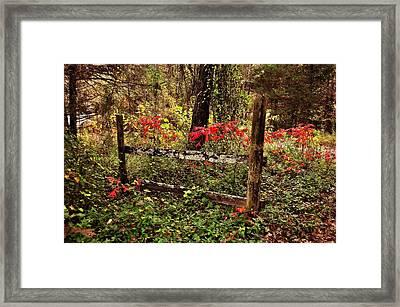 Fence On The Buffalo Framed Print by Marty Koch