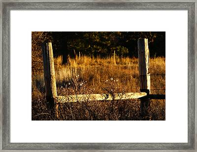 Fence Posts Framed Print