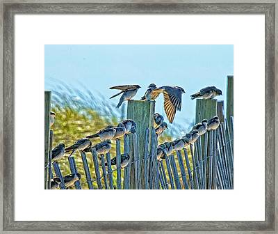 Fence Sitters Framed Print by Constantine Gregory