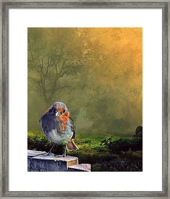Fence Sitting Framed Print