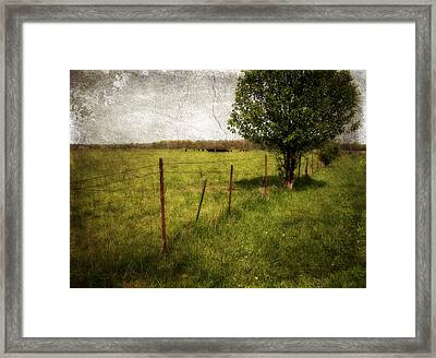 Fence With Tree Framed Print by Cynthia Lassiter