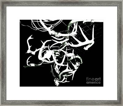 Framed Print featuring the photograph Fenced Antler by Amy Sorrell