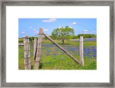 Fenced-in Beauty Framed Print by Lynn Bauer