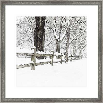Fenced In Forest Framed Print by John Stephens