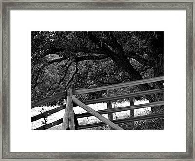 Fenceline Framed Print by Bridget Johnson