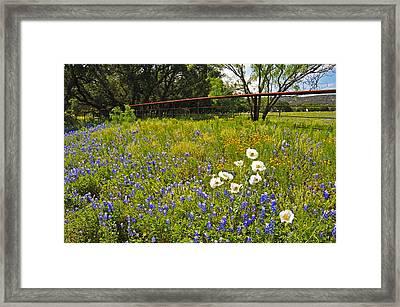 Fenceline Wildflowers Framed Print