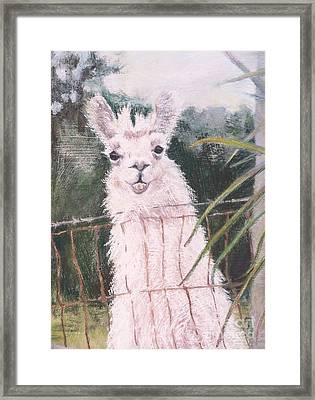 Fences Make Good Neighbors Framed Print by Mary Lynne Powers
