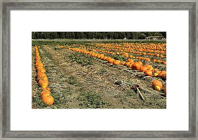 Framed Print featuring the photograph Fencing The Pumpkin Patch by Michael Gordon