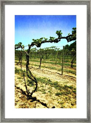 Fenn Valley Vineyards Framed Print by Michelle Calkins