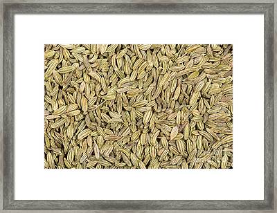 Fennel Seeds Framed Print by Jane Rix