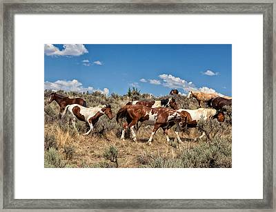 Feral And Free Framed Print