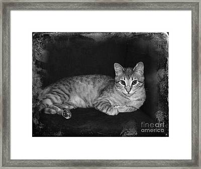 Feral Cat Day Framed Print