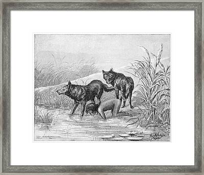 Feral Child Drinking With Wolf Cubs 3 Framed Print By Mary Evans Picture  Library